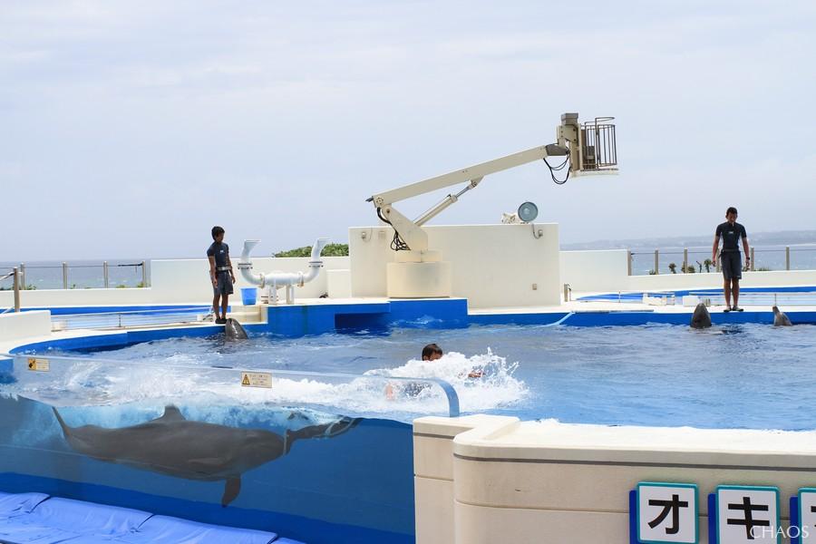 麗星郵輪-沖繩(海洋博公園) (28).jpg
