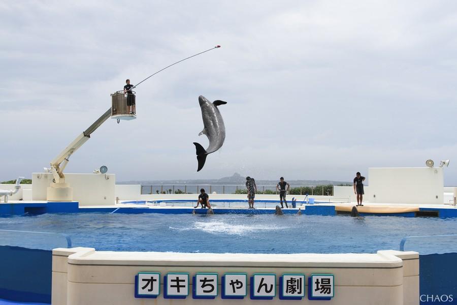 麗星郵輪-沖繩(海洋博公園) (29).jpg