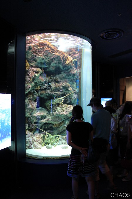 麗星郵輪-沖繩(海洋博公園) (13).jpg