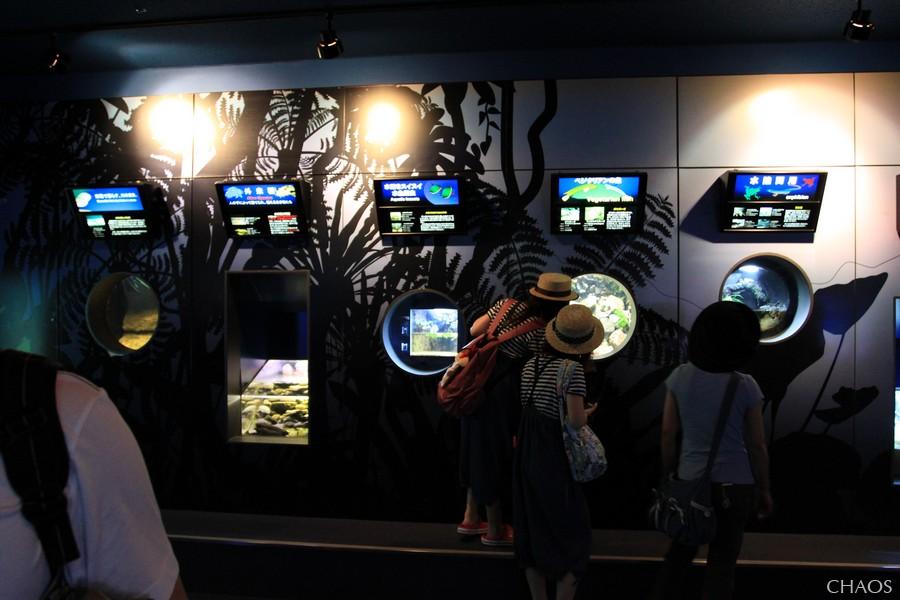 麗星郵輪-沖繩(海洋博公園) (14).jpg