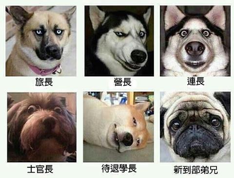 狗臉的歲月