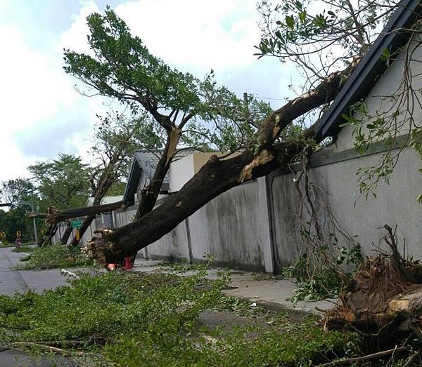 強颱莫蘭蒂侵襲後