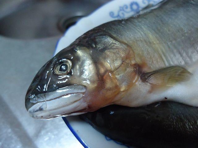 乾煎香魚-7