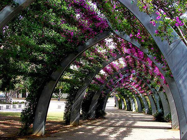 beautiful-streets-trellis-canopies-16