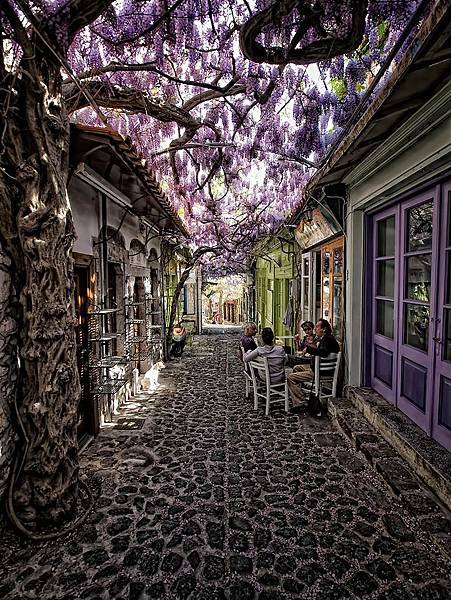 beautiful-streets-trellis-canopies-4__700