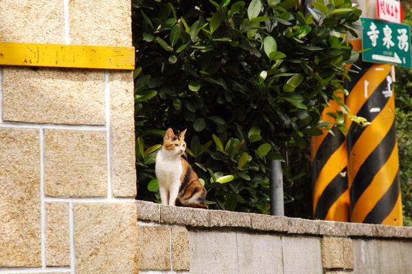 路上的小貓