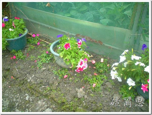 劍門-19-小小花