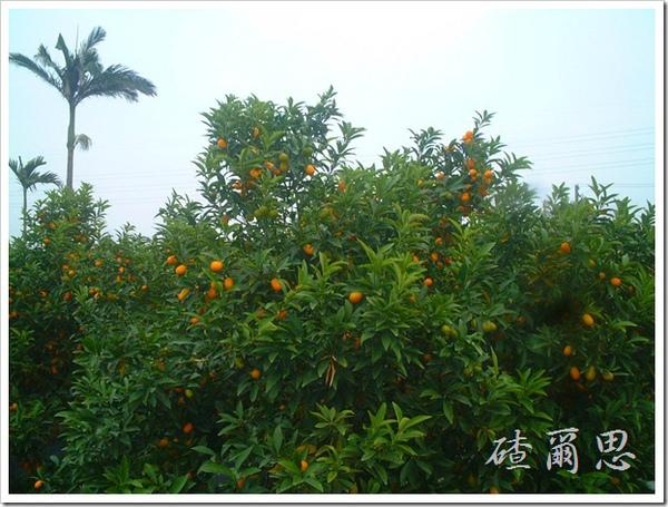 劍門-7-橘子
