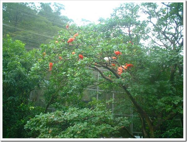 2010竹塘國中畢業旅行 035