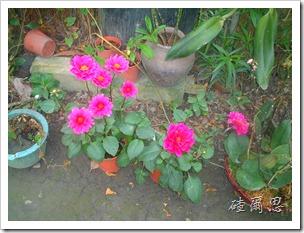 劍門-30-小花