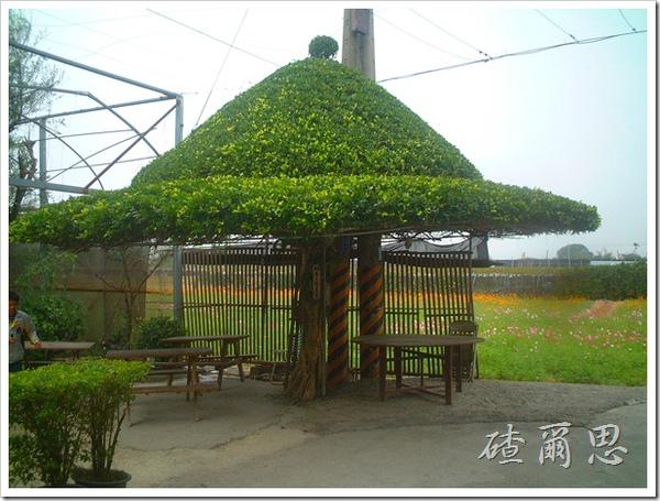 劍門-20-樹中奇屋