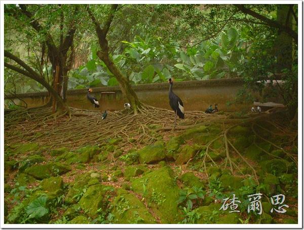 2010竹塘國中畢業旅行 038