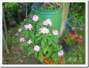 劍門-32-小花