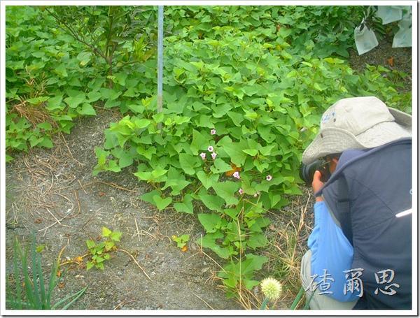 劍門-10-仲由先生與番薯花
