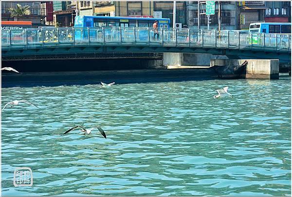 海鷗低飛3.jpg