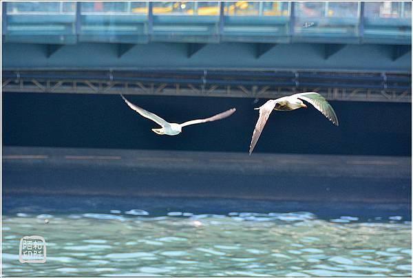海鷗低飛4.jpg
