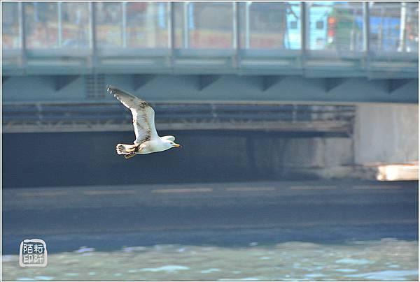 海鷗低飛5.jpg