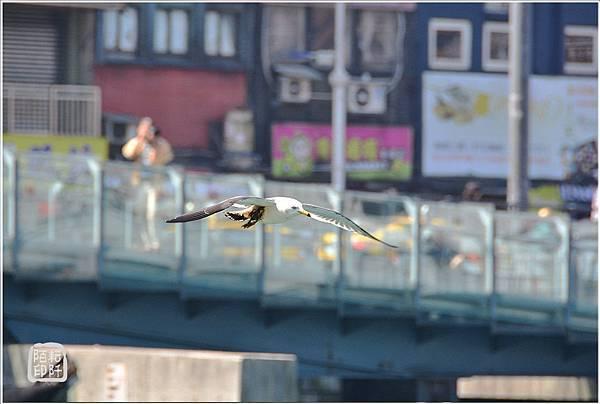 海鷗低飛6.jpg
