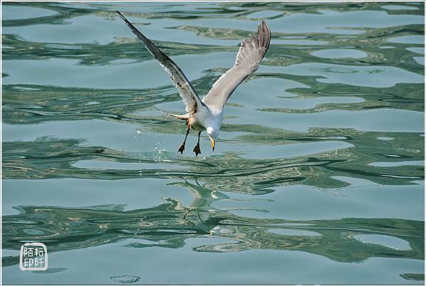 海鷗低飛7.jpg