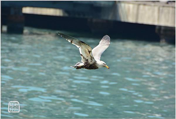 海鷗低飛9.jpg
