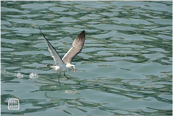 海鷗低飛11.jpg