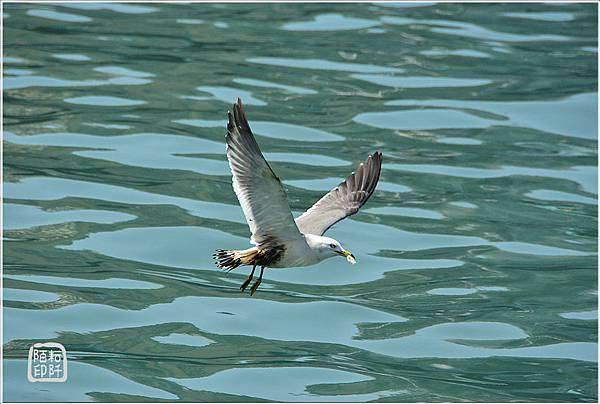 海鷗低飛10.jpg