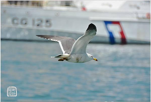 海鷗低飛12.jpg