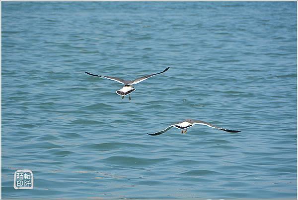 海鷗低飛13.jpg
