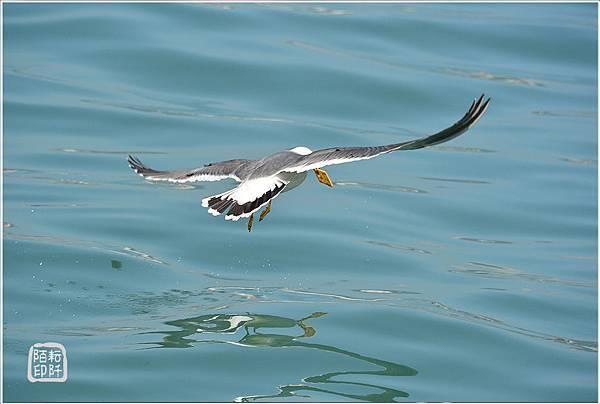 海鷗低飛14.jpg