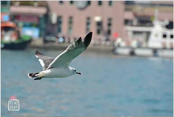 海鷗低飛15.jpg
