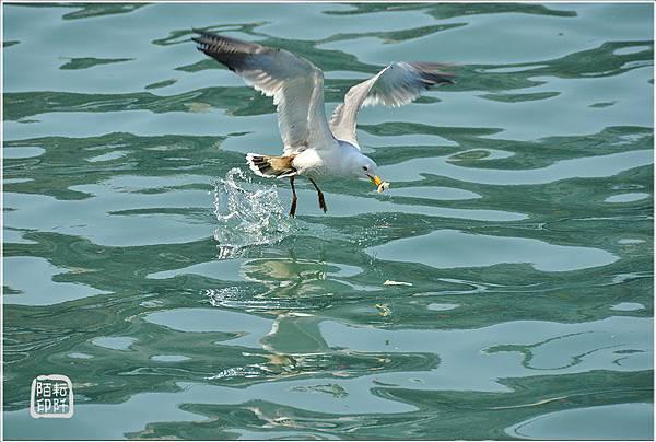 海鷗低飛16.jpg