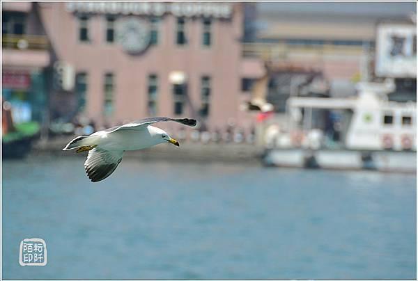 海鷗低飛17.jpg
