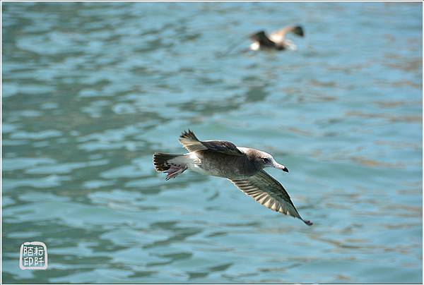 海鷗低飛18.jpg