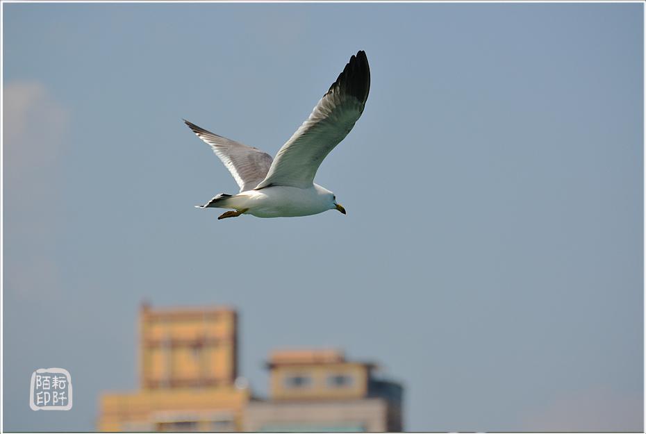 海鷗美姿1.jpg