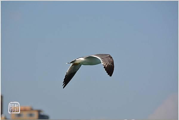 海鷗美姿2.jpg