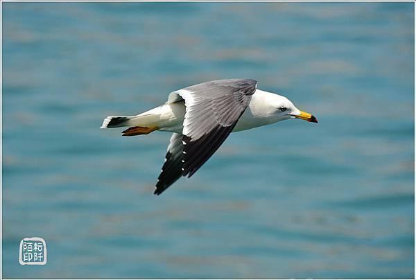 海鷗美姿3.jpg