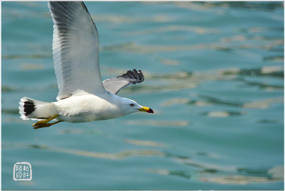 海鷗美姿4.jpg