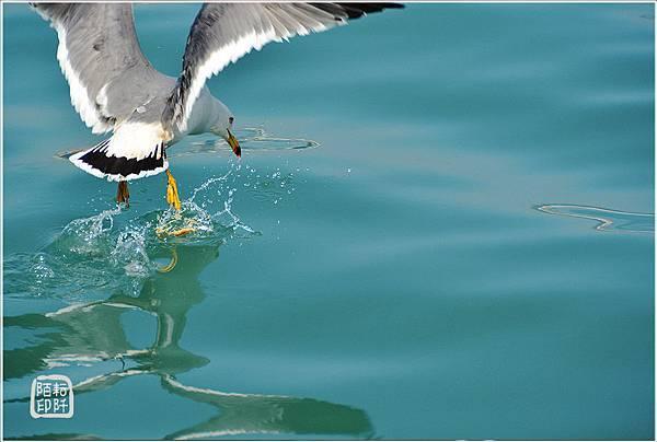 海鷗美姿5.jpg