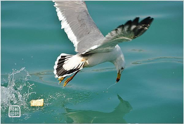 海鷗美姿6.jpg