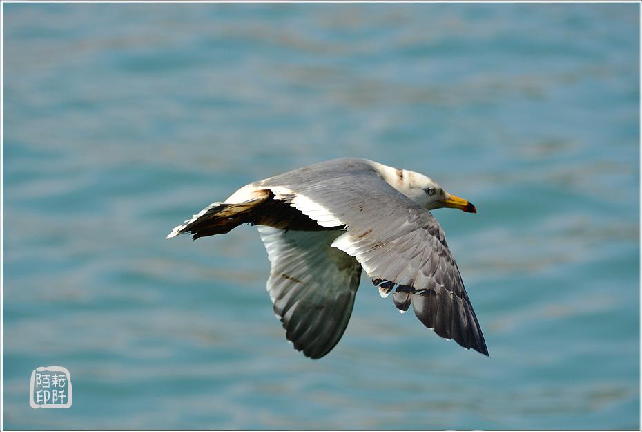 海鷗美姿7.jpg