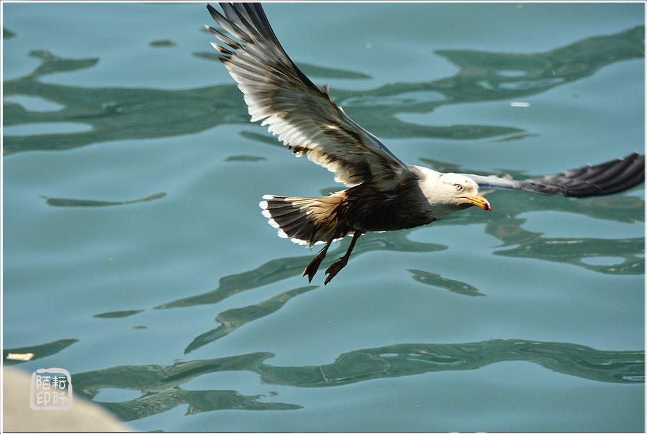 海鷗美姿8.jpg