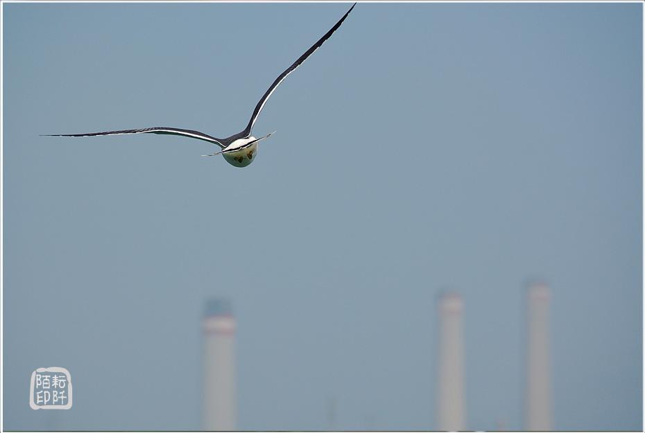 海鷗美姿10.jpg