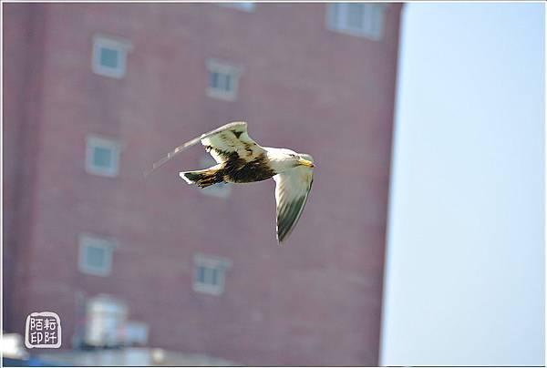 海鷗美姿9.jpg