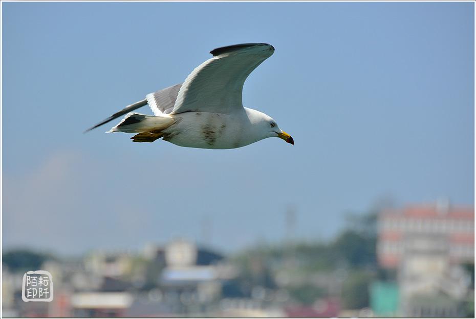 海鷗美姿11.jpg