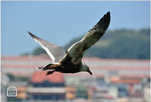 海鷗美姿12.jpg