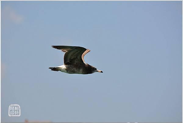 海鷗美姿13.jpg