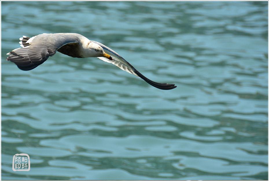 海鷗美姿14.jpg