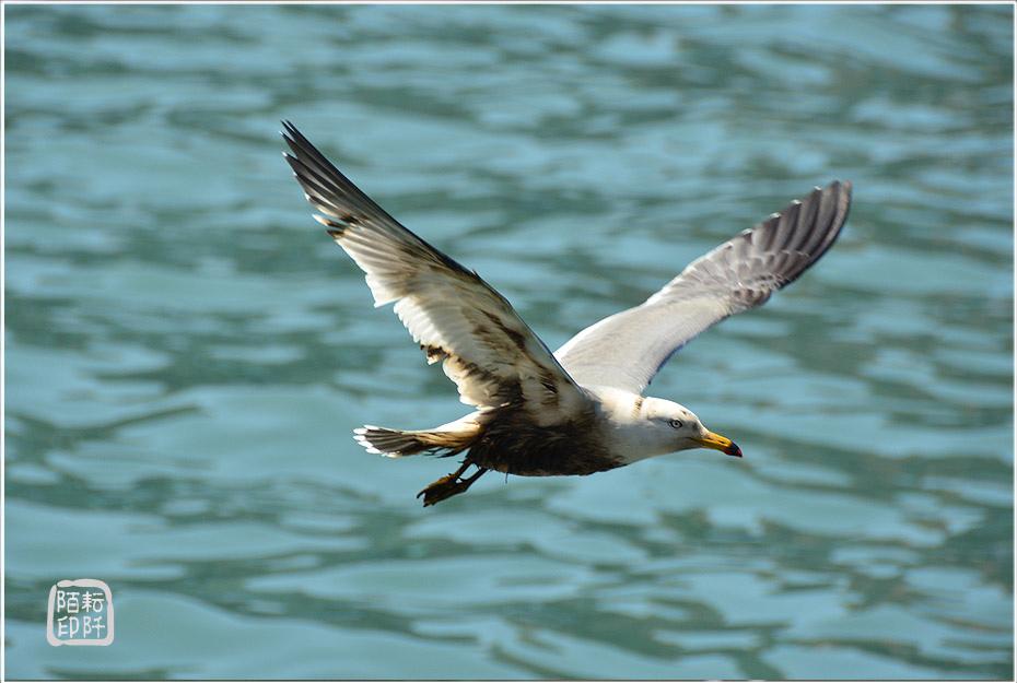 海鷗美姿15.jpg
