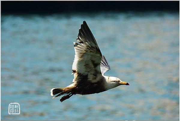 海鷗美姿16.jpg