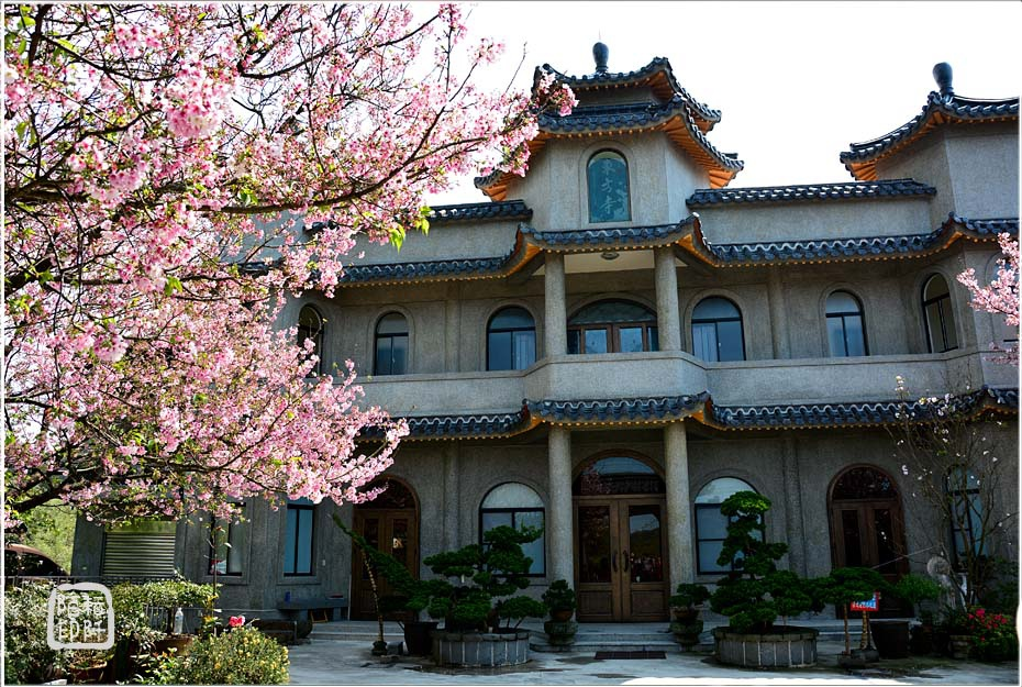 東方寺櫻花2.jpg